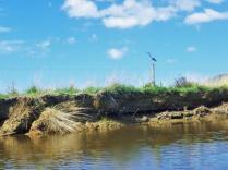 Kopuawhara Stream 4