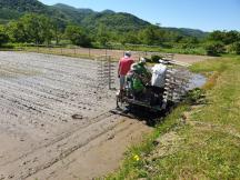 Yoichi rice plant 2