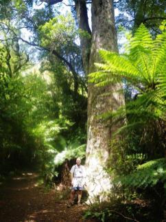 Boundary Stream Matai tree