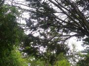 Rawhiti Cave black fantail
