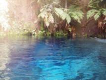 Waihau Spring 3