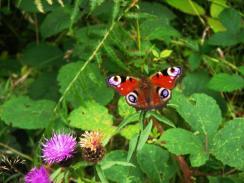 wpid-Betws-Y-Coed-butterfly.jpg
