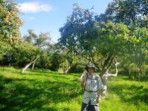 wpid-Glastonbury-Avalon-orchard-1.jpg