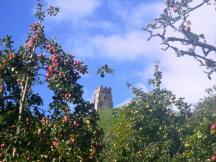 wpid-Glastonbury-Avalon-orchard-2.jpg