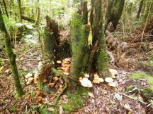 wpid-fungi.jpg