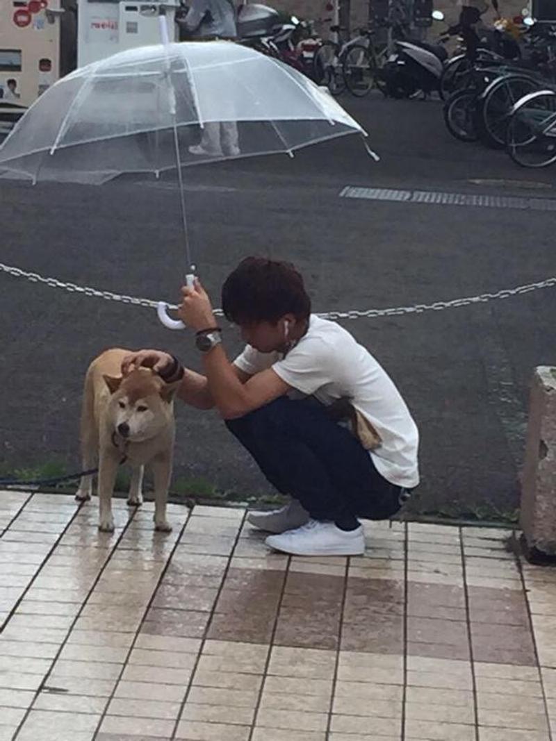 男孩雨中為淋濕的狗狗撐傘 日本網友感動改編成二次元! - JUKSY 街星