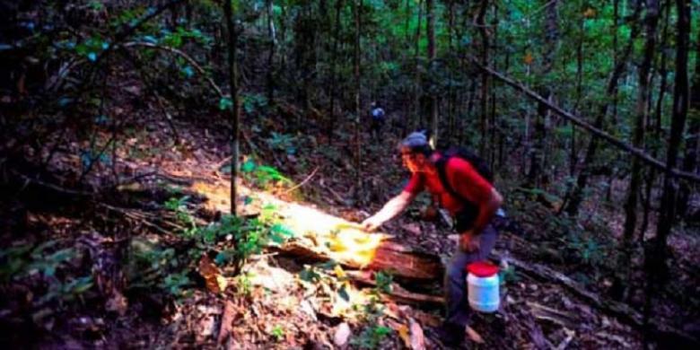 Peneliti mengoleksi spesimen amfibi dan reptilia pada malam hari selama Ekspedisi Lengguru.
