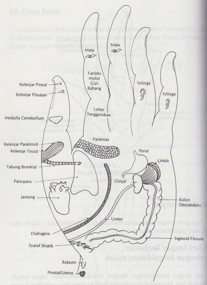 Fungsi Telapak Tangan : fungsi, telapak, tangan, Mendeteksi, Penyakit, Lewat, Telapak, Tangan, Halaman, Kompasiana.com