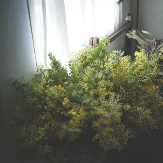dryflower_016