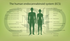 Target Endocannabinoids to Treat Chronic Conditions | Cannabis Sciences