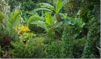 What exotic plants to grow - Gardening