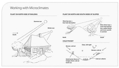 Microclimates: How To Change Your Gardens Climate