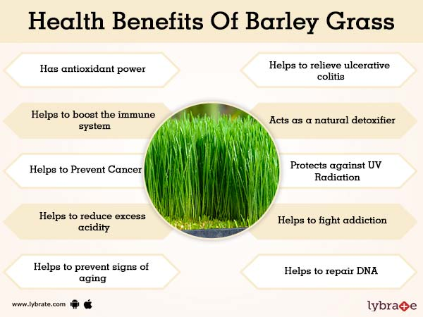 Benefits of Barley Grass And Its Side Effects | Lybrate