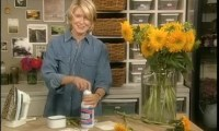 Video: How to Care for Your Carpet | Martha Stewart