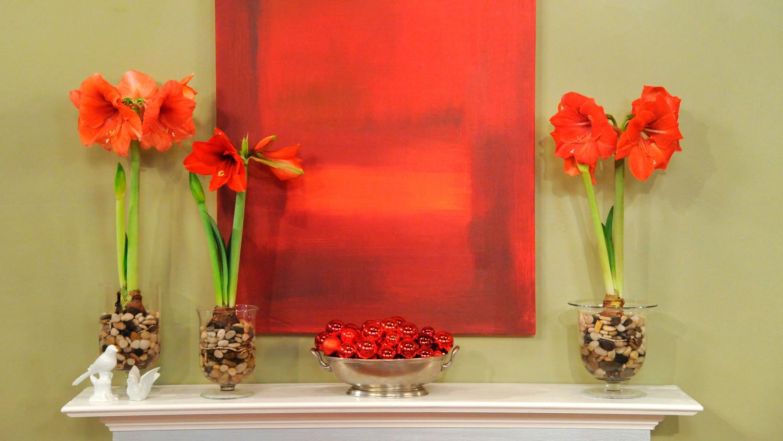 3 Ways To Plant Amaryllis Martha Stewart