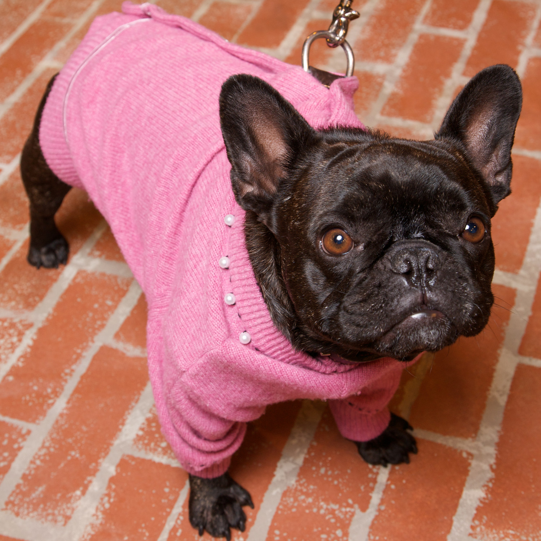 Wool Cardigan Dog Coat & Video Martha Stewart