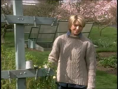 Video Ask Martha Raspberry Patch  Martha Stewart