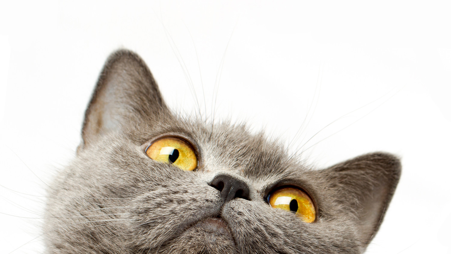 The 4 Things About Cat Behavior That You Should Know  Martha Stewart