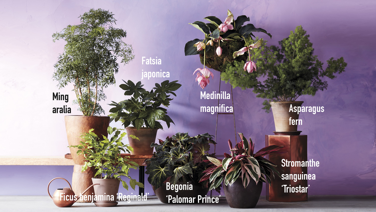 Grow Gorgeous Houseplants In Any Kind Of Light Martha