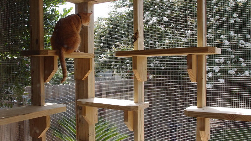 Catios Its a Patio for Your Cat