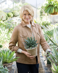The Best Plants To Purify Your Home Martha Stewart