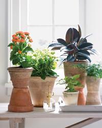 10 Plants That Ll Help You Sleep Better Martha Stewart