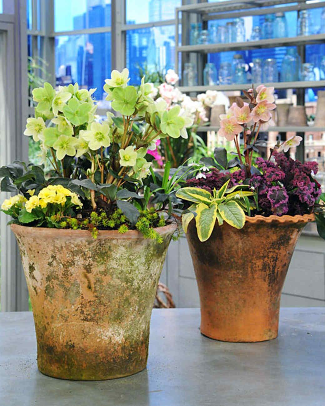 Spring Container Planting & Video Martha Stewart
