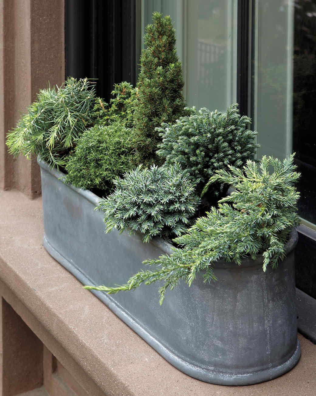 Container Garden Ideas Household Martha Stewart