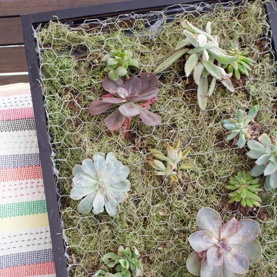 How To Build A Succulent Wall Planter Martha Stewart