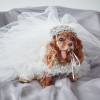 EXCLUSIVE: Get a First Look at Toast the Dog's Marchesa ...