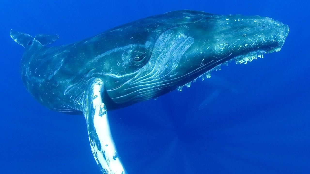 大翅鯨之歌 Humpbacks: Cracking the Code - National Geographic Channel - 香港