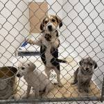 BC SPCA seizes 97 animals from property in Princeton