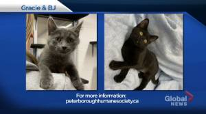 Global Peterborough's Shelter Pet Project: Oct. 2, 2020 (01:53)