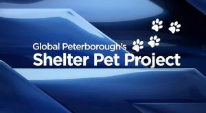 Global Peterborough Shelter Pet Project: Sept. 25, 2020 (02:24)