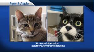Global Peterborough's Shelter Pet Project for Aug. 6, 2021 (02:16)