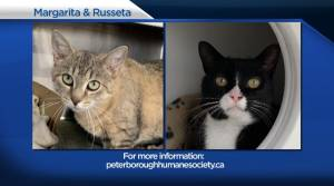 Global Peterborough's Shelter Pet Project for Jan. 29, 2021 (02:10)