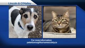 Global Peterborough's Shelter Pet Project for March 19, 2021 (02:19)