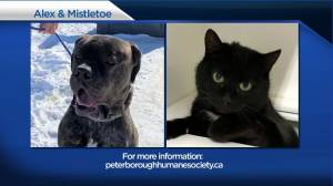 Global Peterborough's Shelter Pet Project for February 26, 2021 (02:34)