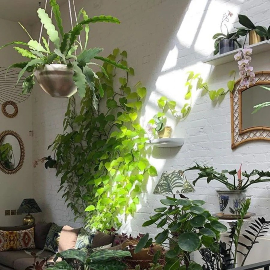 Do Indoor Plants Improve Air Quality