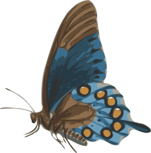 butterfly side papilio clip philenor onlinelabels svg