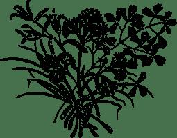 OnlineLabels Clip Art   parsley