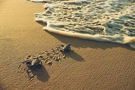 / ©:  © WWF-Canon / Roger LeGUEN