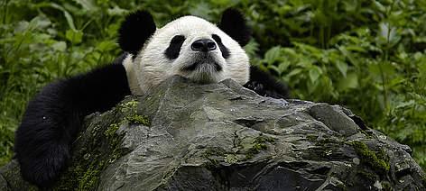 / ©: Bernard  DE WETTER / WWF-Canon