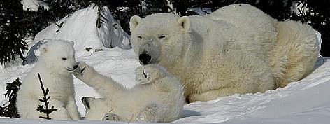 / ©: Peter EWINS / WWF-Canada