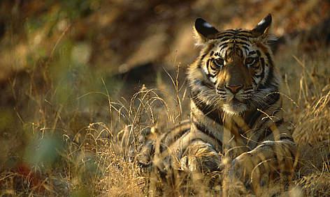 / ©: Staffan Widstrand / WWF