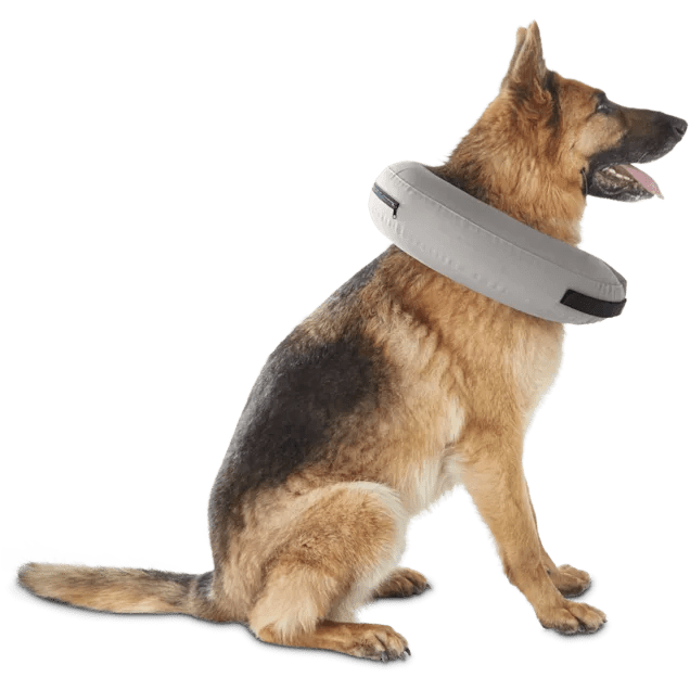 well good inflatable collar for dogs and cats large x large