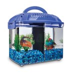 Imagitarium Betta Fish Dual Habitat Tank In Blue 0 8 Gal Petco