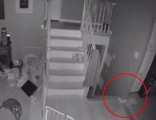 Il filme le fantôme d'un enfant en train de jouer avec son animal de compagnie