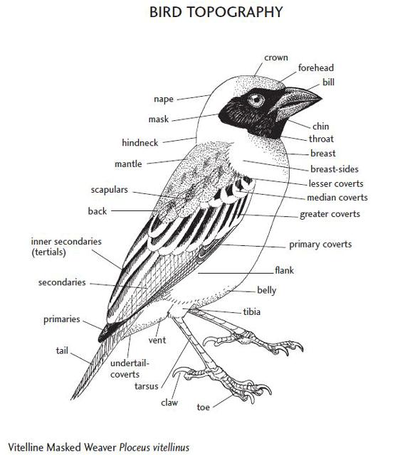 Demey, R. and Borrow, N.: Birds of Western Africa: Second