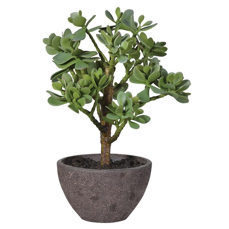 Artificial Green Money Tree Succulent Plant  Mulberry Moon